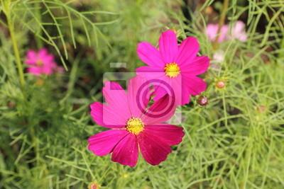 Polne kwiaty Lato