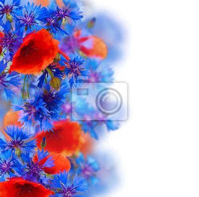 polne kwiaty obramowanie na białym tle
