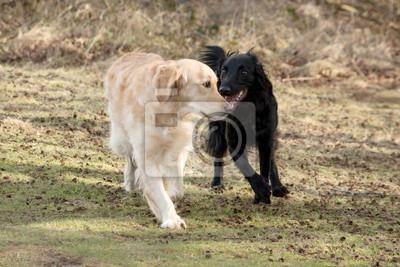 psy na spacerze spotkań