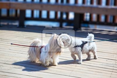 Psy spotkanie