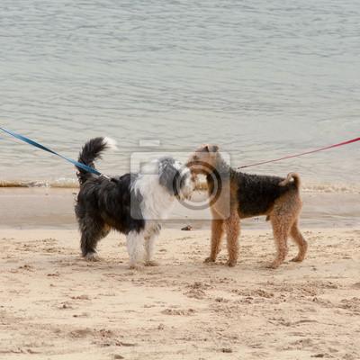 Psy zebrani na plaży