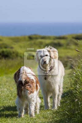 retriever pies pokojowy spotkanie nowego przyjaciela