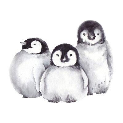 Tapeta Rodzina cute pingwina dziecka. Akwarela ilustracja na białym tle.