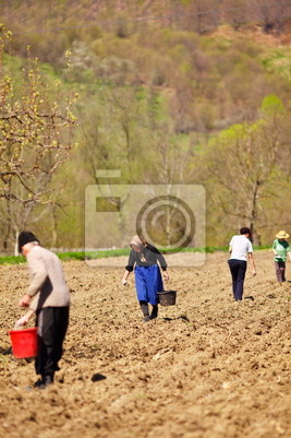 Tapeta Rodzina siewu rolników ich gruntów
