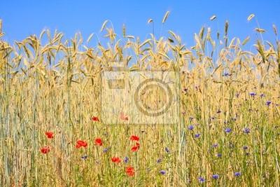 Roggen mit feldblumen żytnia z kwiatów polnych