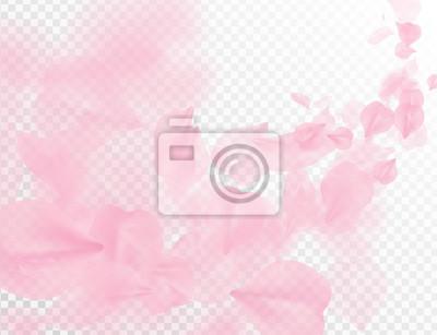 Tapeta Sakura petal flying vector background. Pink flower petals wave illustration isolated on transparent white. 3D romantic valentines day spring tender light backdrop. Overlay tenderness romance design.