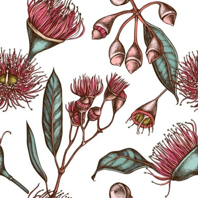 Tapeta Seamless pattern with hand drawn colored eucalyptus flower
