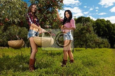 Tapeta Seksowne kobiety zbieranie jabłek