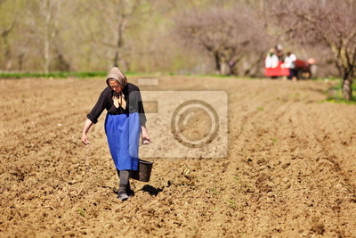 Tapeta Senior kobieta siewu rolnik