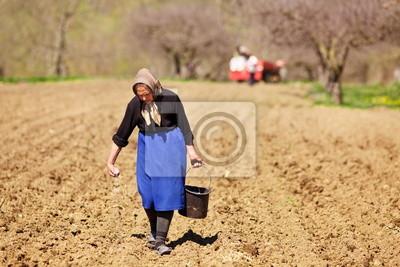 Senior kobieta siewu rolnik