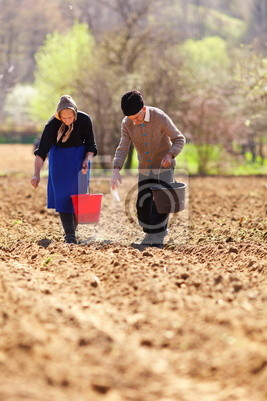 Tapeta Senior sadzenia para na ich ziemi
