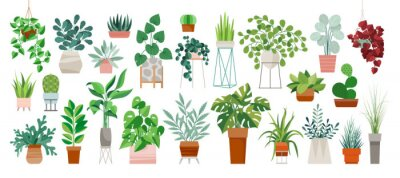 Tapeta Set of trendy potted plants for home. Different indoor houseplants isolated on white background. Alocasia, begonia, fan palm, monstera, ficus, strelitzia and oxalis. Colored flat vector illustration