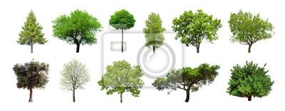 Tapeta Set zieleni drzewa odizolowywający na białym tle. Różne rodzaje kolekcji drzew