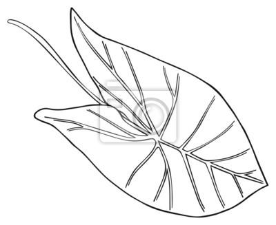 Shadeful las - tropikalna Colocasia liści