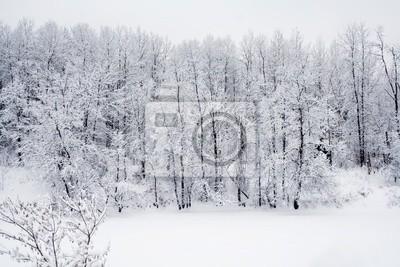 Tapeta śnieg las