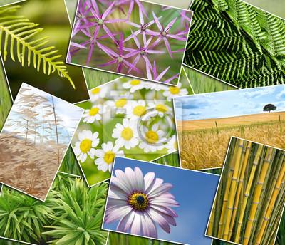 Środowisko naturalne Zielone Rośliny kwiaty pola Montage