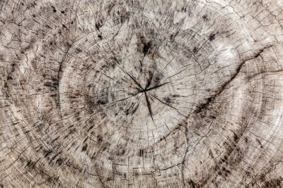 Tapeta Stare brązowe drzewo krzyż cut texture