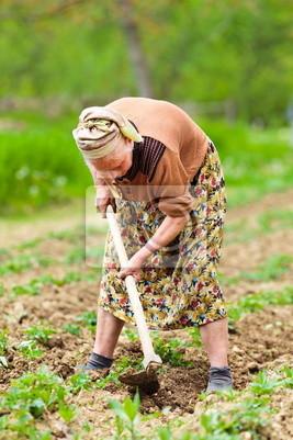 Tapeta Stare wiejskie kobieta pracuje na ziemi