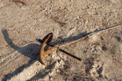 Stare zardzewiałe kotwicy na piasku.