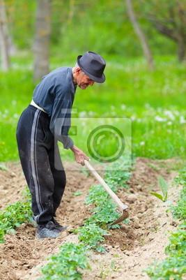 Stary rolnik pracy ziemi
