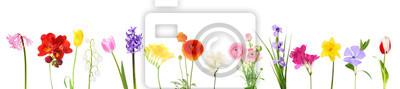 Tapeta Świeże wiosenne kwiaty na białym
