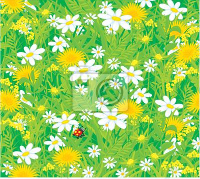 Tło z biedronki i pola kwiatów