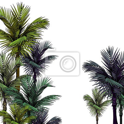 Tapeta Tropical card with palm trees. Hand drawn vector illustration isolated on white background.