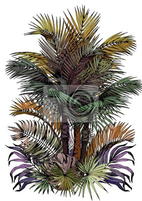 Tapeta Tropical card with palm trees. Oasis scenery. Hand drawn vector illustration isolated on white background.