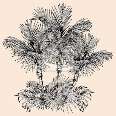 Tapeta Tropical card with sketchy palm trees and leaves. Oasis scenery. Hand drawn vector illustration isolated on beige background.