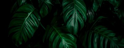 Tapeta tropical leaf, abstract green leaf texture, nature background