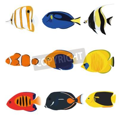 Tropikalne ryby zestaw zawierający dziewięć ryb: Copperband Skalary, blue tang, Moonrish Idol, Clownfish, Flameback Skalary, Zamaskowany Skalary, Płomień Skalary, Achilles Tang, Rock Beauty Skalary.