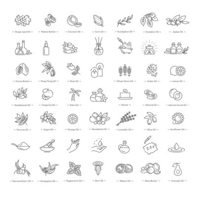 Tapeta Vector set of natural ingredients and oils for cosmetics in linear style