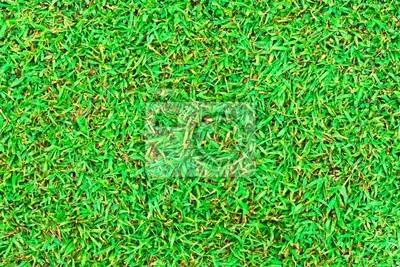 Tapeta Wet zielona trawa pola powierzchni