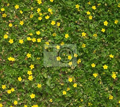 Wiele żółte polne kwiaty w zielonej trawie bliska