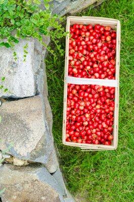 Wiśnie organiczne z bio ogrodu