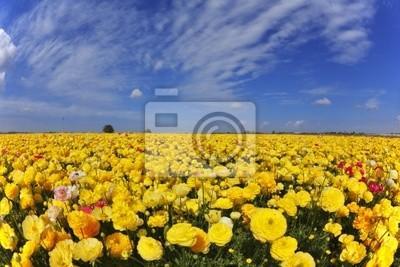 Wspaniały dzień wiosny w polach kwiatów