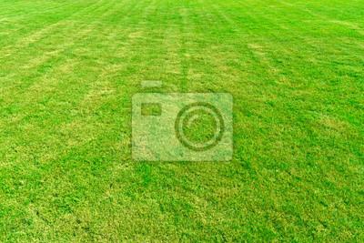 Tapeta Wyłożona wzór trawa zielona dziedzinie