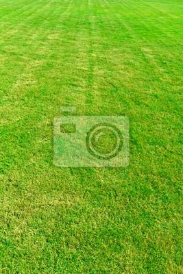 Wyłożona wzór trawa zielona dziedzinie