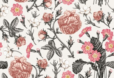 Tapeta Wzór. Piękne różowe kwitnące realistyczne pojedyncze kwiaty. Tło. Kwiaty primula Rose pierwiosnka. Tapetowy barokowy bukiet. Rysunek grawerowanie wektor wiktoriański ilustracja