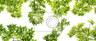 Tapeta zestaw gałęzi z liśćmi na białym tle