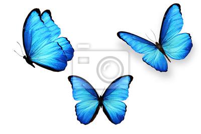 Tapeta zestaw niebieskie motyle na białym tle