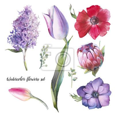 Tapeta Zestaw ręcznie malowane elementy kwiatowe. Akwarela botaniczna ilustracja tulipan, protea, anemon, bzu kwiaty i liście. Naturalne obiekty na białym tle