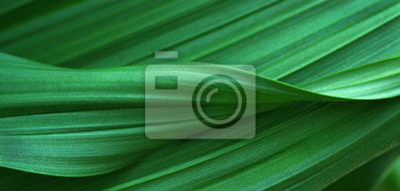 Tapeta Zielone liście na tle