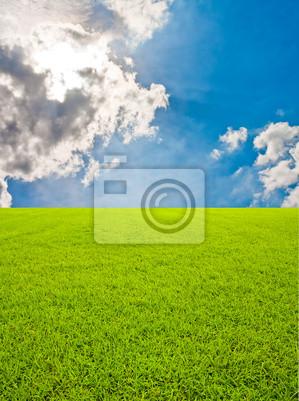 Zielone pole trawy i bkue niebo