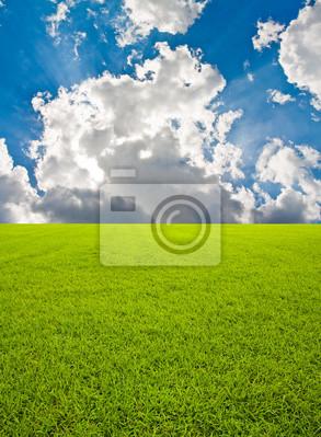 Tapeta Zielone pole trawy i niebo z belki bkue