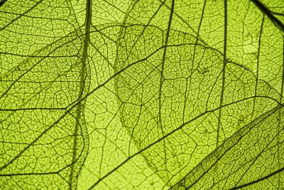 Tapeta zielony liść tekstury - w szczegółach