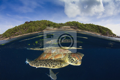 Zielony żółw morski i tropikalny raj wyspa