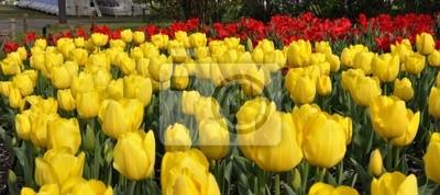 Tapeta Żółte tulipany w ogrodzie japońskim