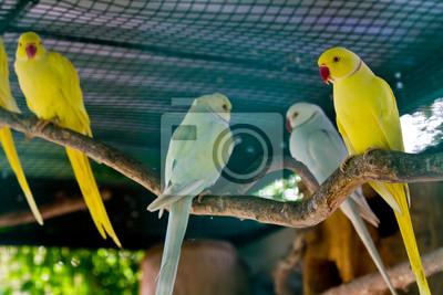 Żółty i zielony ara czerwony dziób